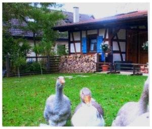 Heimatmuseum Höfle in Jettenburg